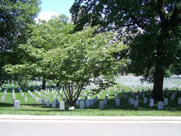 ARLINGTON CEMETERY AMERICAN EX-PRISONERS OF WAR KOUSA DOGWOOD MEMORIAL TREE