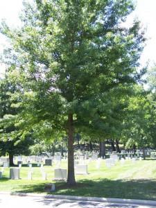 War-Memorial-Tree